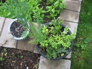 My herb pot is out of control.  The green below is Mint (huge patch)