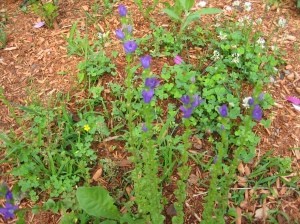 Surprised purple flower stalks